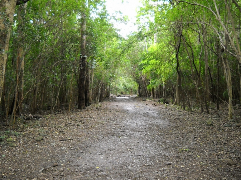 black river gorges national park gardens and cemeteries mauritius