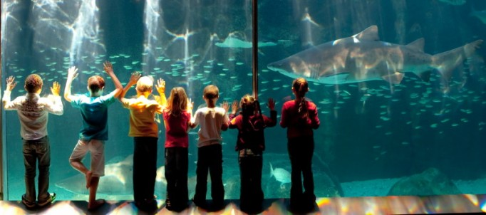 two oceans aquarium cape town
