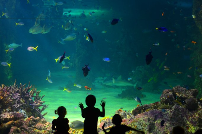inside view of sea Llfe aquarium sydney