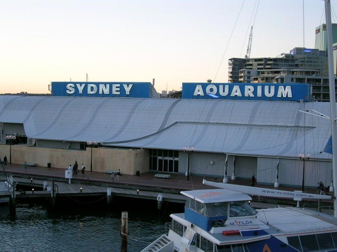sea life aquarium sydney
