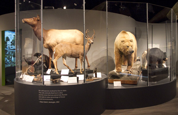 Animals Statue in Museum of Vancouver