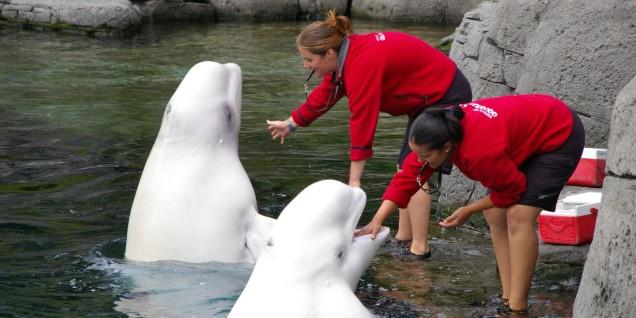 Vancouver Aquarium's Political Gaming